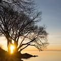 On Fire - Bright Sunrise Through The Willows by Georgia Mizuleva