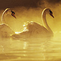 On Golden Pond by Brent Black - Printscapes