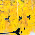 On Golden Pond by David Arment