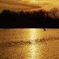 On Golden Pond by Mark Miller
