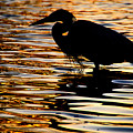 On Golden Pond by Neil Shapiro