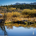 On Golden Pond by Penny Miller