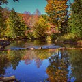 On Kinzua Creek by Shelley Smith