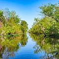 On The Bayou 3 by Steve Harrington
