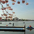 On The Cherry Blossom Dock by Jost Houk