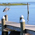 On The Dock Of The Bay by Donna Martin