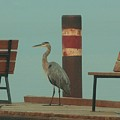 On The Dock With Heron by Roxanne Basford