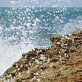 On The Edge Blowing Rocks Preserve Jupiter Island Florida by Michelle Wiarda-Constantine