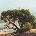 On The Edge by Mykel Davis