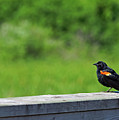 On The Fence by Robin Clifton