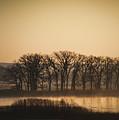 On The Marsh by David Jilek