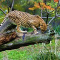 On The Prowl by Keith Lovejoy