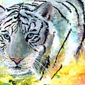 On The Prowl by Sherry Shipley
