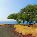 On The Road To Lapakahi by Jennifer Robin