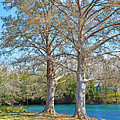 On The San Marcos River Texas by Ray Shrewsberry