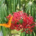 On The Wings Of Butterflies by Sean Allen