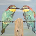 On The Wire Bee-eaters by Eric Kempson