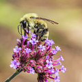 On Top Of The World - Bee Style by Christy Cox