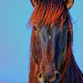 Onaqui Wild Stallion Portrait by Greg Norrell