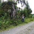 One Big Stump by Ken Day