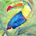 One Can't But Toucan by Marsha Elliott