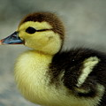 One Cute Duckling by Sami Sarkis