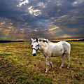 One Horse by Phil Koch