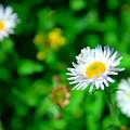 One Little Wildflower by Jeff Swan