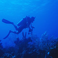 One Man Scuba Diving On Coral Reef by James Forte