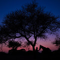 Evening In Rajasthan by Magdalena Strakova