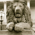 One Of Four Lion Statues Outside St George's Hall Liverpool by Jacek Wojnarowski