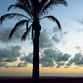 One Palm by Svetlana Sewell