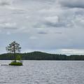 One Pine Island. Koirajarvi by Jouko Lehto