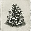 One Pinecone by Charles Harden