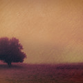 One Solitary Tree by Don Schwartz