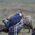 One Stork by Leigh Lofgren