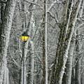 One Strange Tree 1 by David Dunham