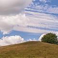 One Tree Hill by Antony McAulay