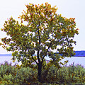 One Tree Hudson River View by Roger Bester