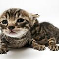 One Week Old Kittens by Yedidya yos mizrachi