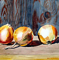 Onions In The Sun by Anne Trotter Hodge