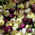 Onions Tri Color by Brenda Pressnall