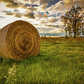 Ontario Hay by Karl Anderson