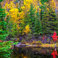 Ontario Tarn by Steve Harrington