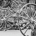 Oo Wagon Wheels Black And White by Scott Campbell