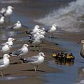 Ducklings In Trouble - Oops Not Into Diversity by John Harmon