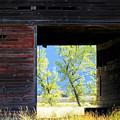 Open Door by Mick Sullivan