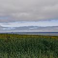 Open Vista. Lizard Point. by Elena Perelman