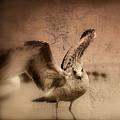 Open Wings by Susanne Van Hulst
