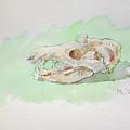 Opossum Skull by Marc Clamage